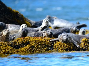 4 Days Guided Nature and Wildlife Tour in Alaska, USA