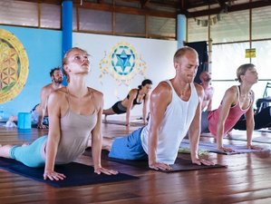 28 Days 200-Hour Ashtanga Vinyasa Yoga Teacher Training Koh Phangan, Thailand