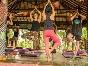 24 Days 200-Hour Multi Style Yoga Teacher Training Course in Ubud, Bali