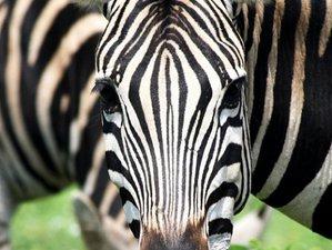 6 Day Volunteer Kruger Park Safari Tour