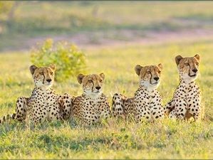 4 Days Maasai Mara and Lake Nakuru Safari
