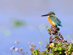 6 Day Astonishing Wildlife Tour in Chitwan National Park and Kathmandu, Nepal