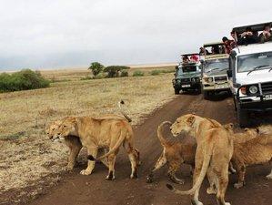 8 Days Best Multi-Country Safari in Kenya and Tanzania
