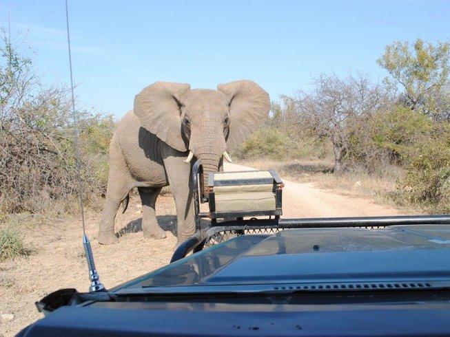 4 Days Budget Big Five Safari in Kruger National Park, South Africa