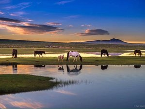 7 Days Unforgettable Horse Riding Tour in Central Mongolia