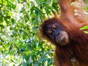 6 Days Paradise Wildlife Tour in North Sumatra, Indonesia