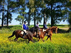 7 Day Incredible Training and Trail Riding Holiday in Carmona near Seville