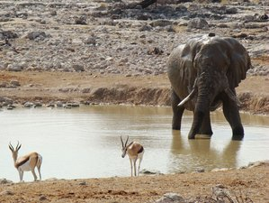 10 Days Etosha National Park Safari in Namibia