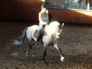 4 Days Amazing Dressage Horse Riding Holiday in Centro, Portugal