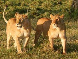 """7 Days """"Sleep with Elephants"""" Safari in Kenya"""