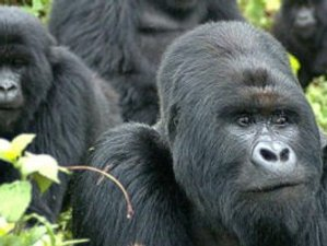 11 Days Jungle Expedition and Adventure Wildlife Safari in Rwanda
