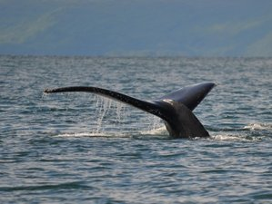 7 Day Guided Nature and Wildlife Tour in Kodiak Island Borough, Alaska