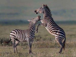 5 Days All-Inclusive Private Tour Mid Range Lodge Safari in Nothern Tanzania