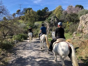 5 Day Gold Package Horse Riding Holiday and Luxury Self-Catering Stay in Beautiful Rural Andalusia
