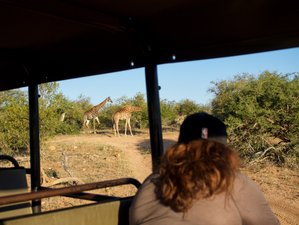 3 Days Lodge and Treehouse Kruger Park Safari, South Africa