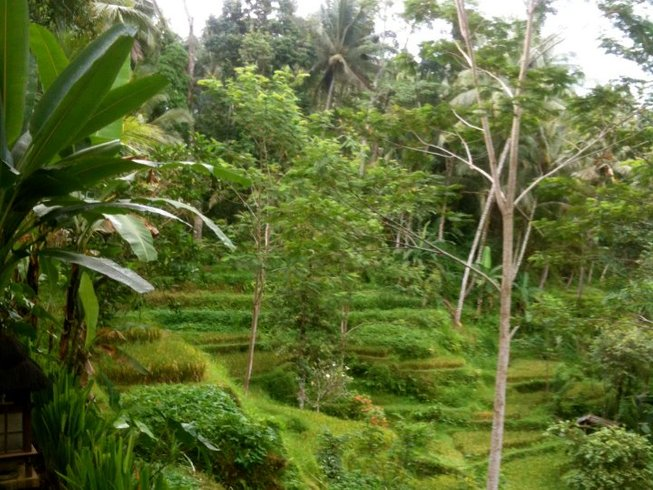 7 Days Yoga Retreat in Ubud, Bali
