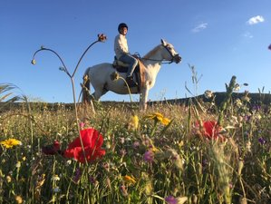 7 Day Andalusian Horse Riding Holiday in Seville Province