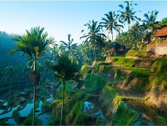 13 Days Dance, Meditation, and Yoga Retreat in Bali