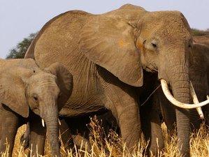 6 Days Exclusive Luxury Safari in Tanzania