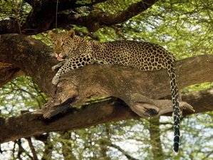6 Days Savannah Safari in Tanzania