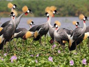 7 Days Ultimate Bird Watching Safaris in Uganda