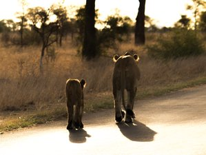 5 Days Exhilarating Treehouse Budget Safari Kruger National Park South Africa