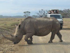 4 Days Wildlife Safari in Masai Mara National Reserve and Lake Nakuru National Park Tour in Kenya