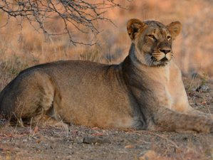 6 Days Dream Route Safari in Balule and Kruger, South Africa