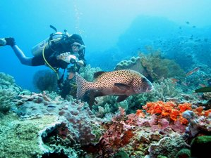 6 Days Yoga and Diving Holiday in Seririt, Bali