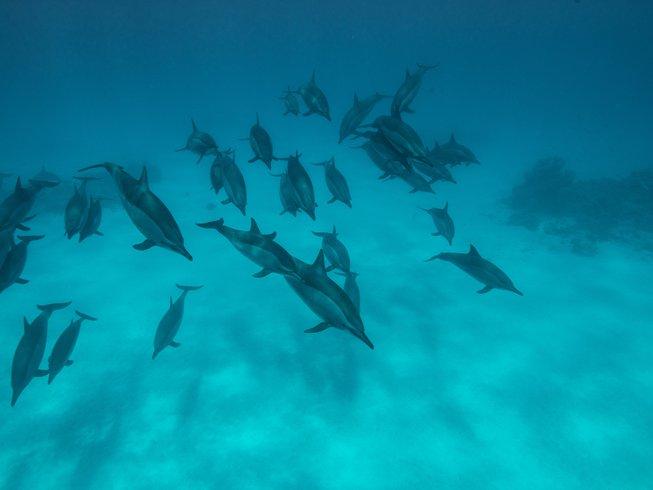 8-Daagse Cruise, Yoga en Zwemmen met Dolfijnen in Sataya Bay, Egypte