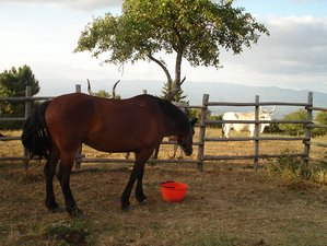 5 Day A Taste of Tuscany Horse Riding Holiday, Province of Arezzo