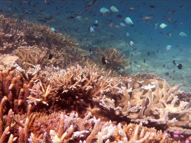 7 Tage Insel Yoga Urlaub auf Fidschi
