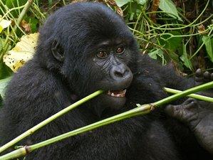 3 Days Gorilla Trekking in Bwindi National Park, Uganda