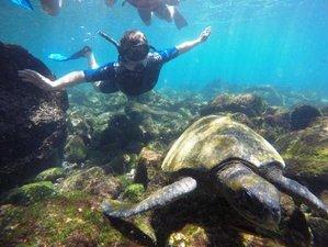 10-Daags Onvergetelijk Jungle Avontuur, Wildlife Tour en Verkenning van de Galapagoseilanden, Ecuador