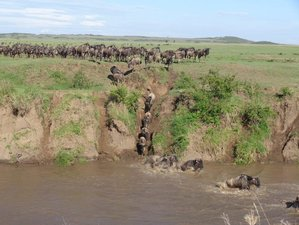 3 Days Great Wildebeest Migration Safari in Maasai Mara, Kenya