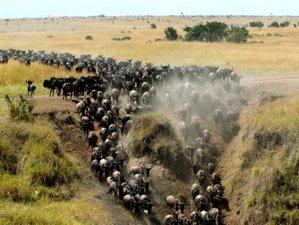 6 Days Maasai Mara, Lake Nakuru, and Amboseli Safari in Kenya