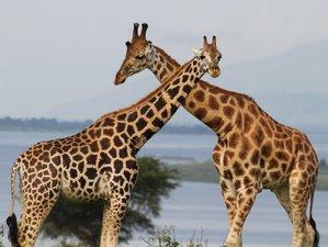 7 Days Kibale, Queen Elizabeth, and Bwindi National Parks Wildlife Safari in Uganda
