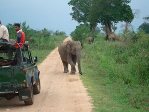 10 Days Serene Minds Safari and Yoga Holiday Sri Lanka