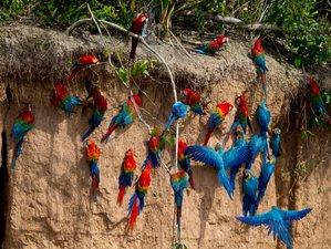 3 Day Amazon Expedition Wildlife Tour in Tambopata, Madre de Dios Region