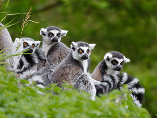 14 Days Madagascar Wildlife Safari Adventure
