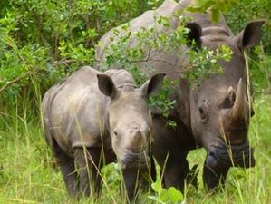 3 Days Safari in Murchison Falls and Ziwa Rhino Sanctuary, Uganda