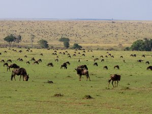 8 Days Migration Northern Parks Safari Package in Tanzania