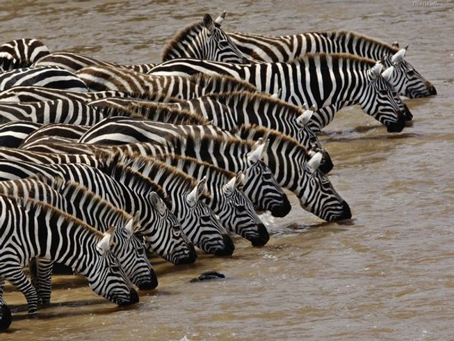 3 Days Budget Camp Safari in Masai Mara Kenya