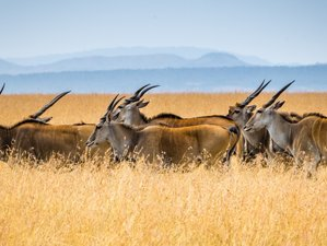Impala Safaris