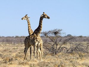 3 Days Etosha National Park Safari in Namibia