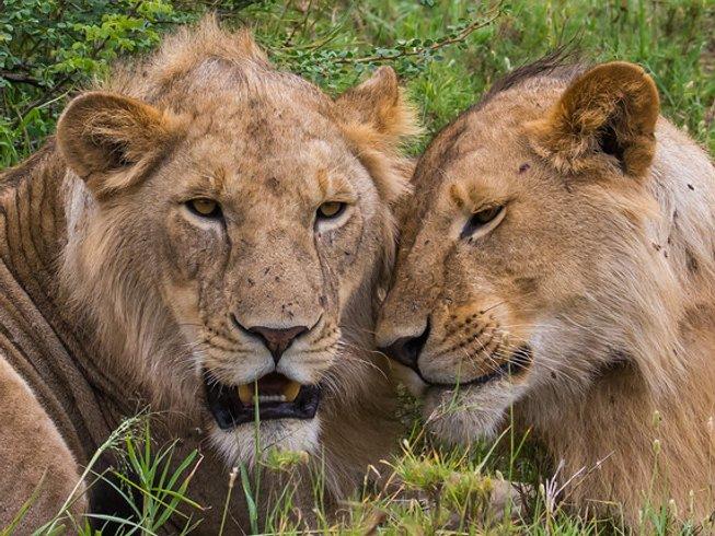 3 Days Exciting Experience Tanzania Safaris