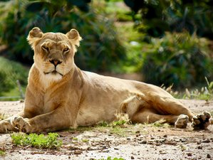 5 Days Tarangire, Serengeti, and Ngorongoro Safari in Tanzania