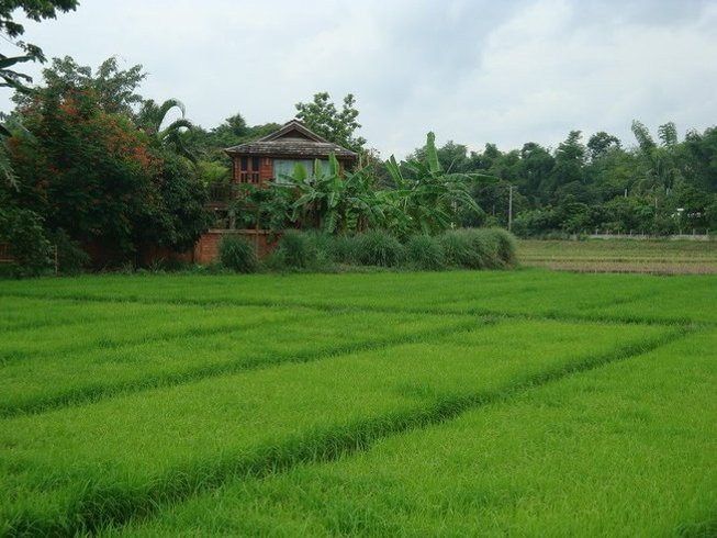 6 Days Five Animal Frolics Medical Qigong in Chiang Mai
