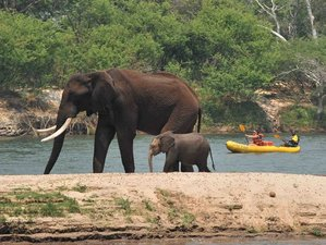 5 Days Budget Safari in Zimbabwe on a Canoe