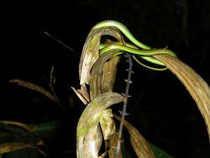 4 días de tour de vida silvestre en Taman Negara, Malasia
